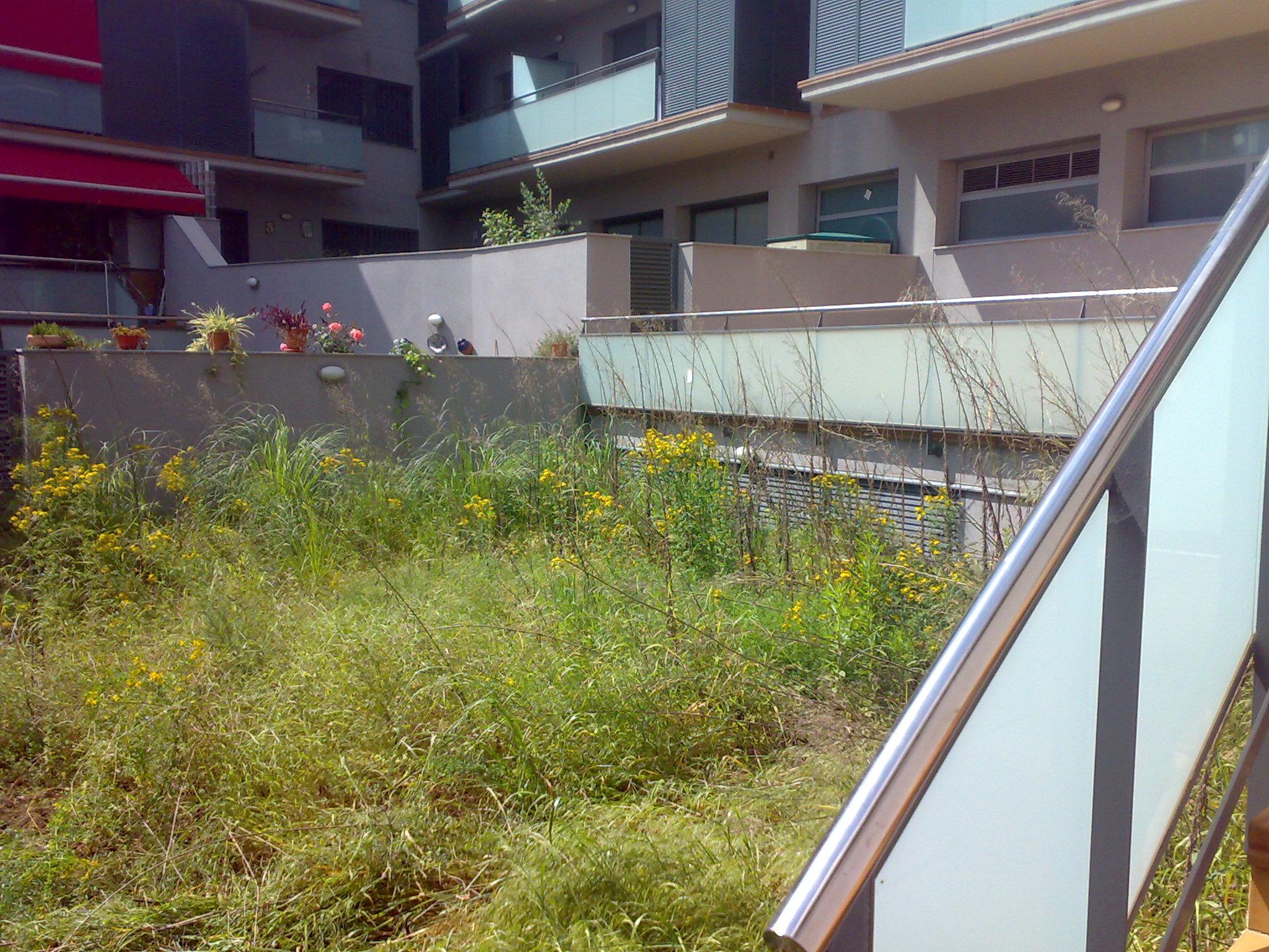 Desbroce de patio en Viladecans, Barcelona, Estado inicial