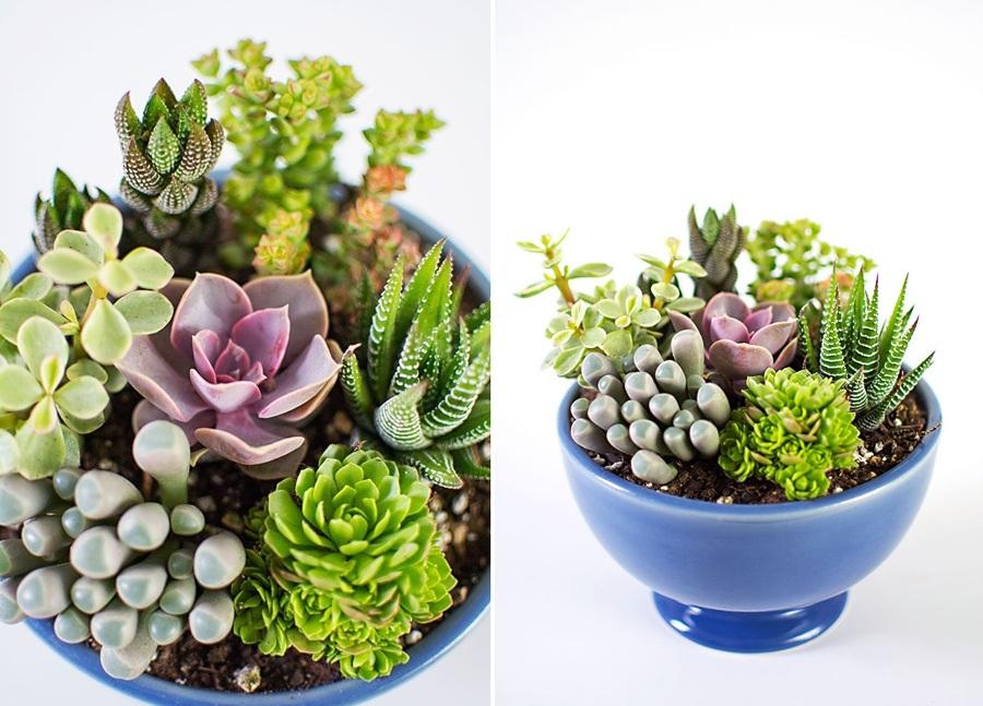 5 Plantas de interior que no podrás matar - Suculenta