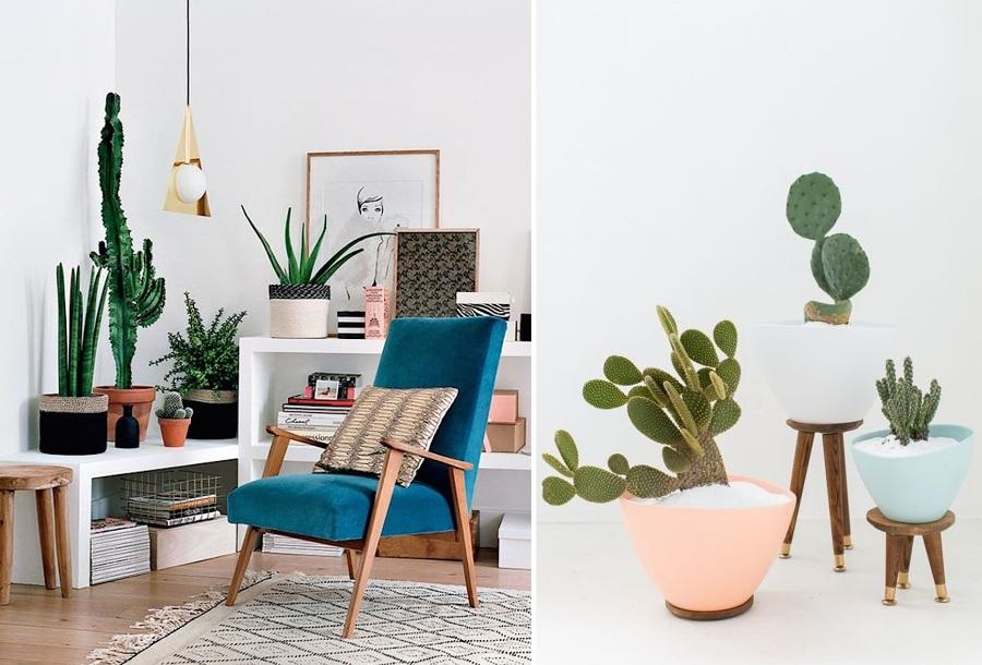 5 Plantas de interior que no podrás matar - Cactus interior
