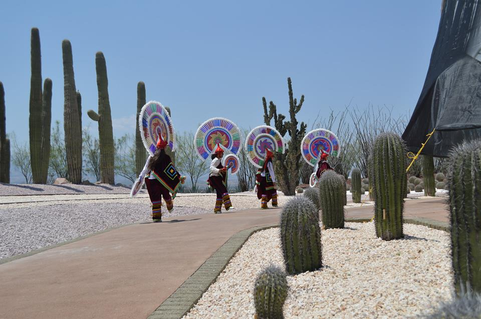 Jardines de mexico cactus