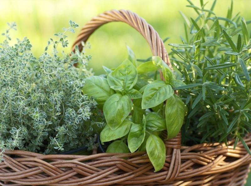 Cesta con plantas aromáticas