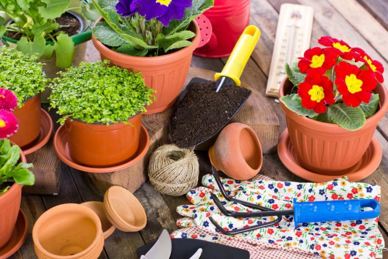 consejos-eficientes-cuidar-plantas-hogar