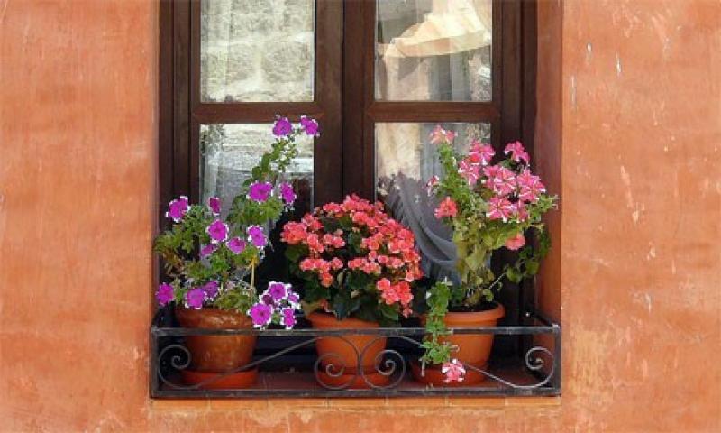 Macetas en ventanas