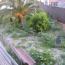 Desbroce de parcela, Sant Joan Despi, Barcelona, Estado inicial